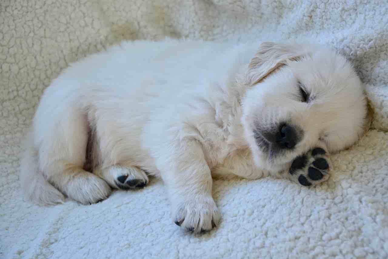 éducation du chiot dormir seul