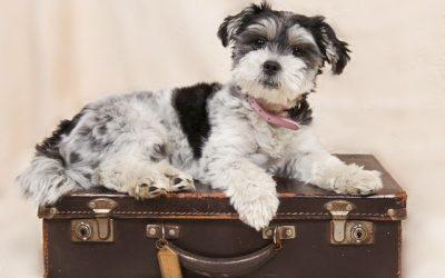 Prévoir son départ en vacances quand on a un chien