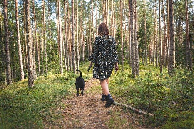 Promenade avec son chien en fôret