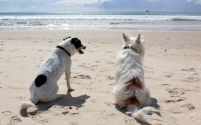 Honfleur : Quelles sont les plages autorisées aux chiens ?