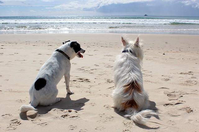 chiens assis sur la plage