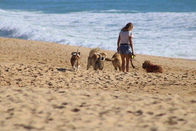 Chiens se promenant sur la plage avec leur maitresse