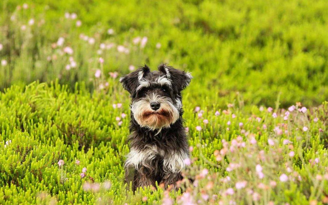Top 7 + 1 Pension canine Évreux – Solutions de garde de chiens à Evreux