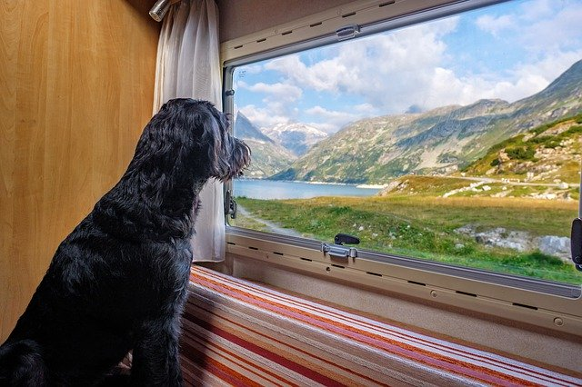 Chien qui regarde par la fenêtre d'un camping-car