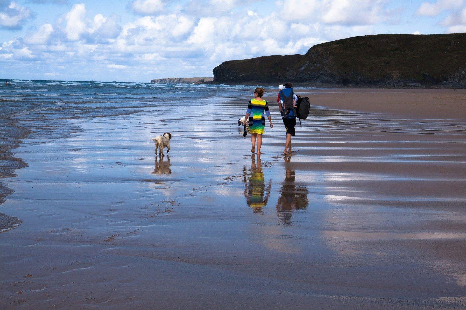 Chien qui se balade sur la plage avec ses maitres