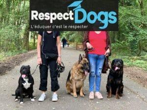 dresseur pour chiens Rouen
