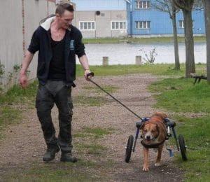 educateur comportementaliste canin caen