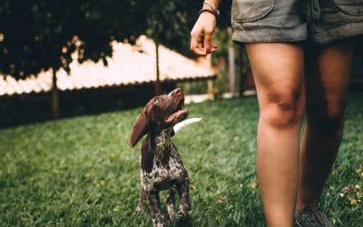 Pension canine Caen : Trouver une solution de Garde pour chien à Caen