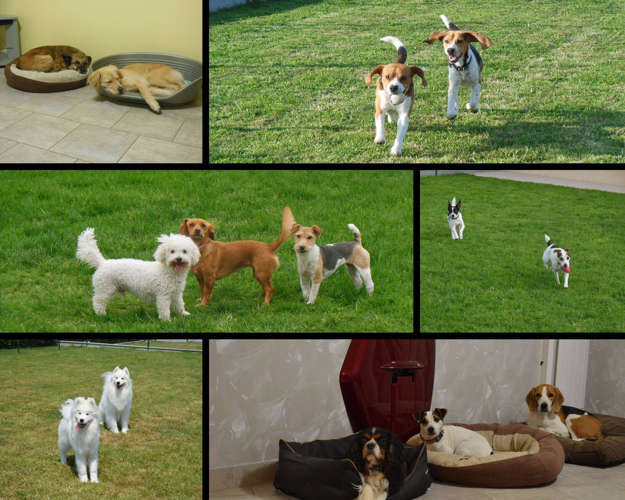 chiens en pension canine
