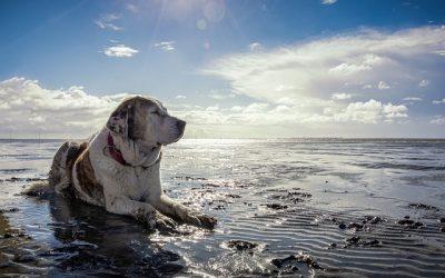 Gironde : Plages autorisées aux chiens