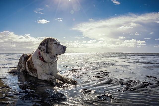 plages autorisées aux chiens arcachon