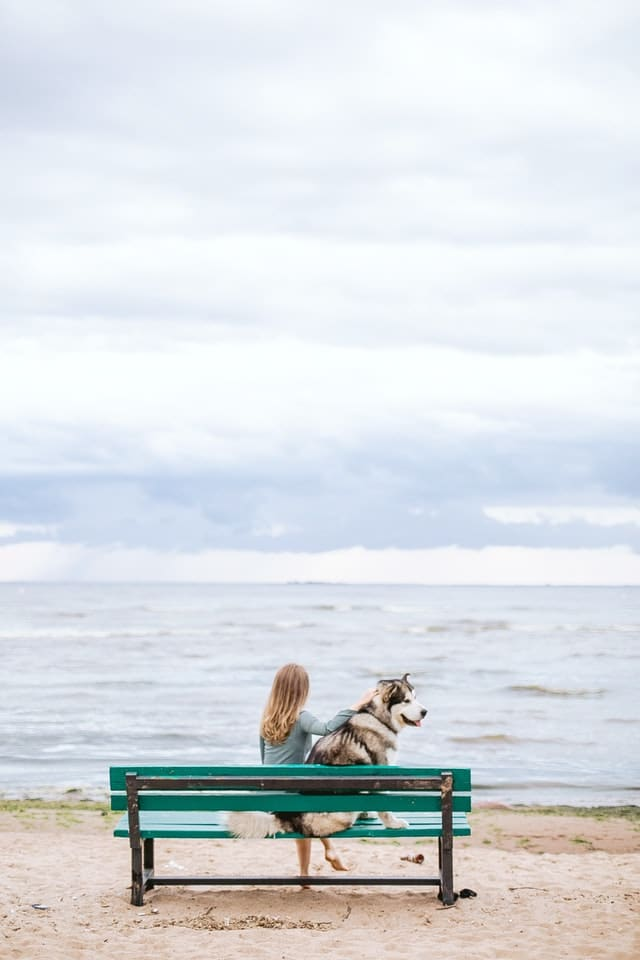 Malamute et sa maitresse assis sur un banc face à la mer