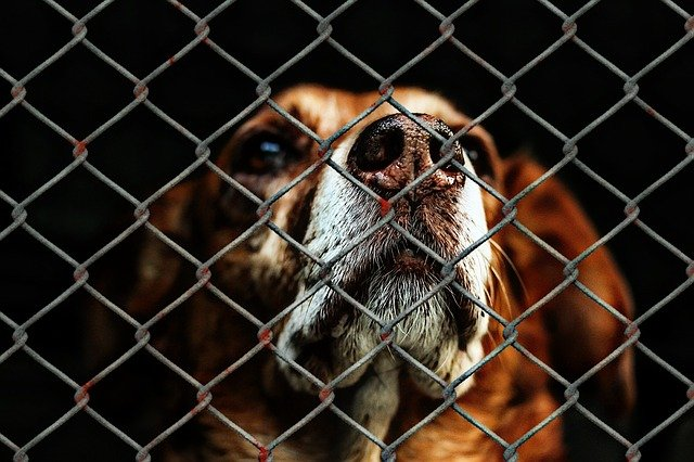 Trouver un refuge pour chien en Gironde