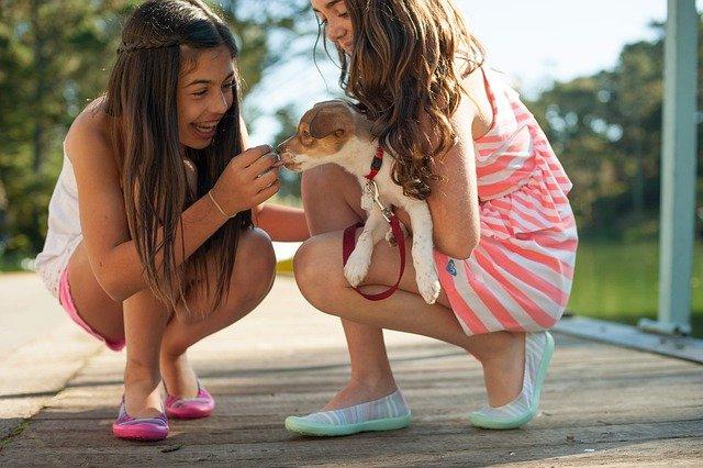chiot dans les bras de deux jeunes filles