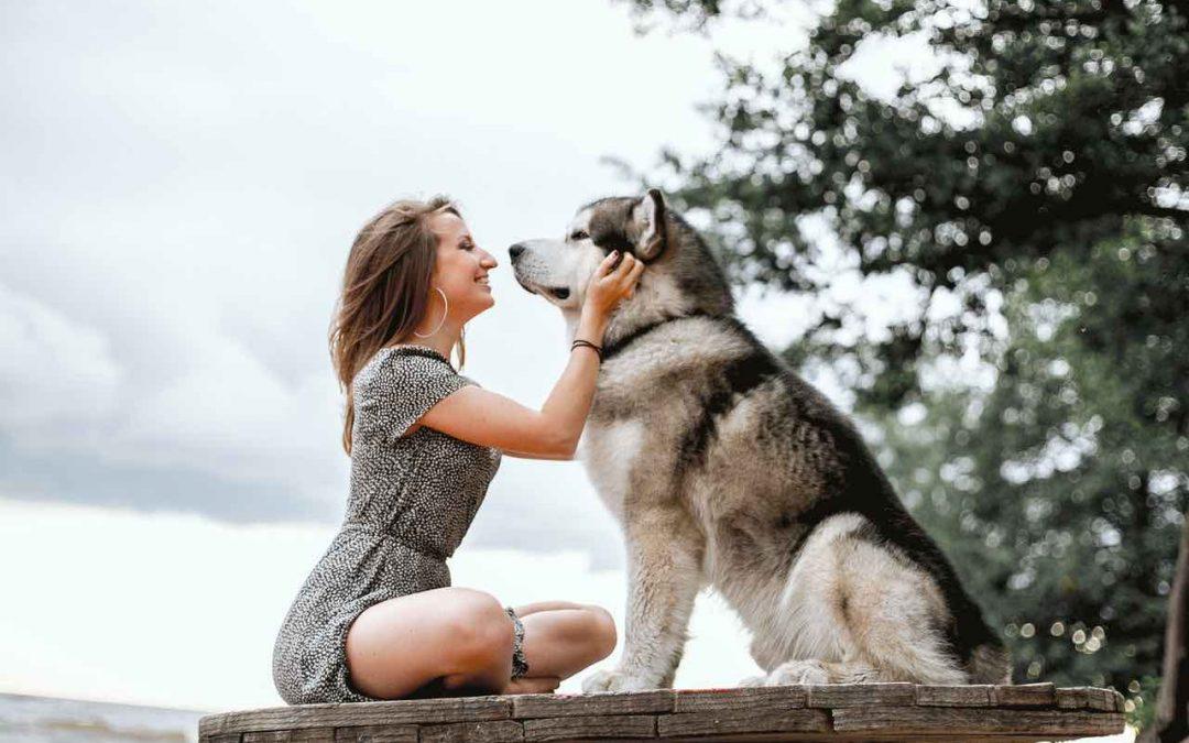 5 raisons de devenir éducateur canin