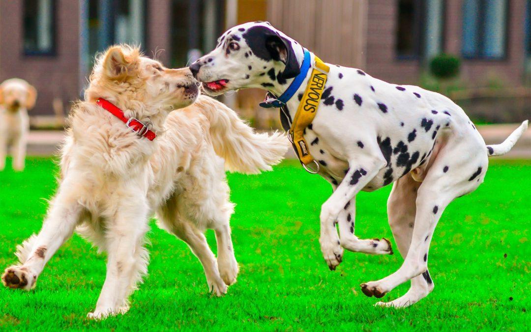 Trouver une pension pour chien près de Bordeaux