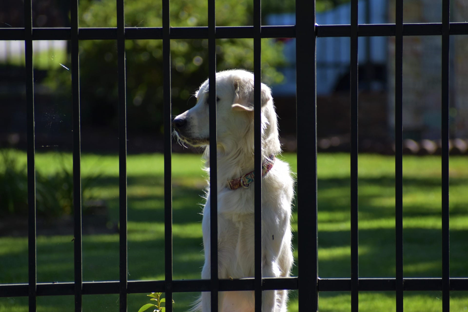 chien dans une jardin