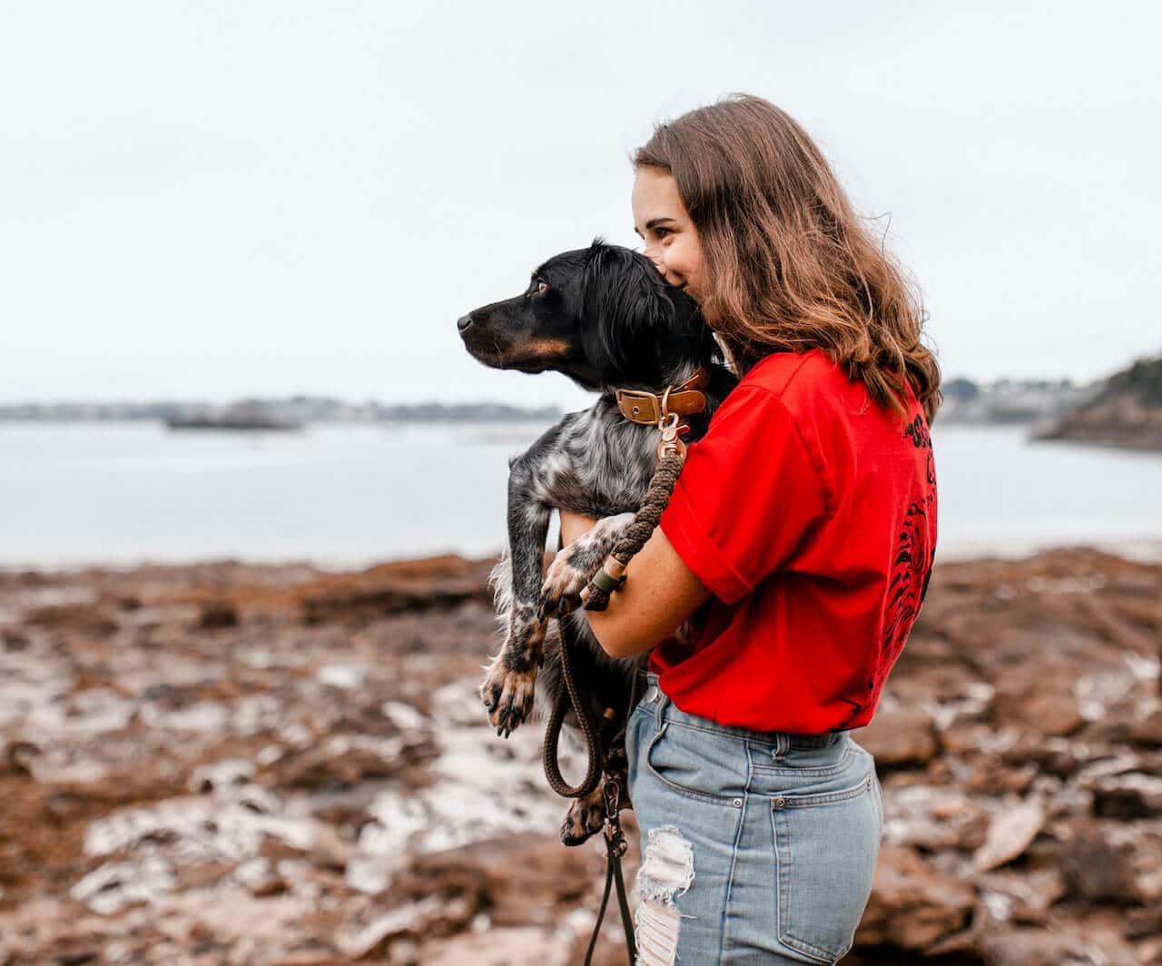 dressage chien beauvais