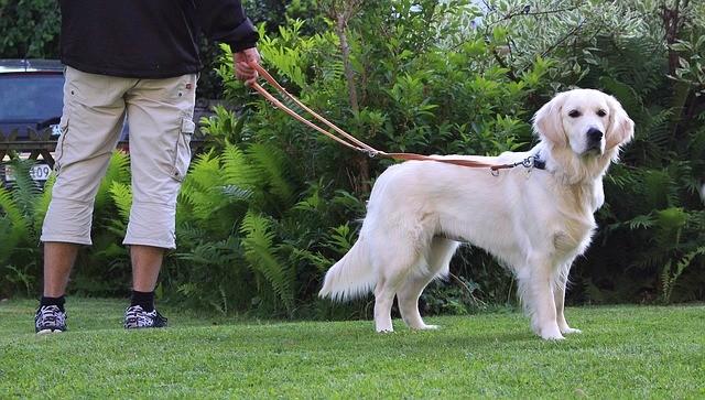 Comment calmer son chien en promenade ?