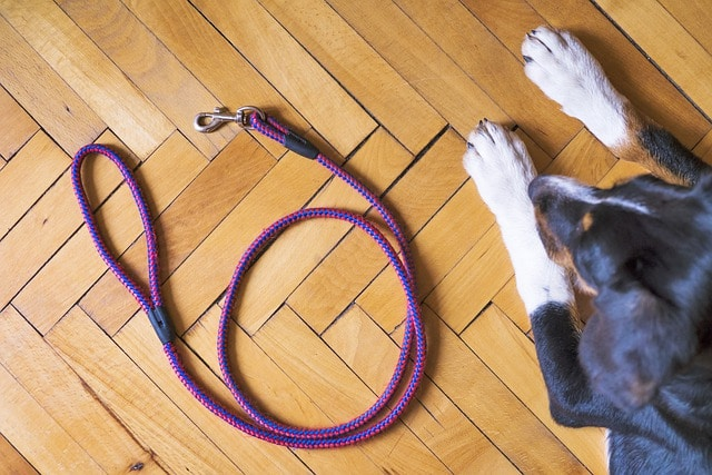 Quelle laisse pour un chien qui tire