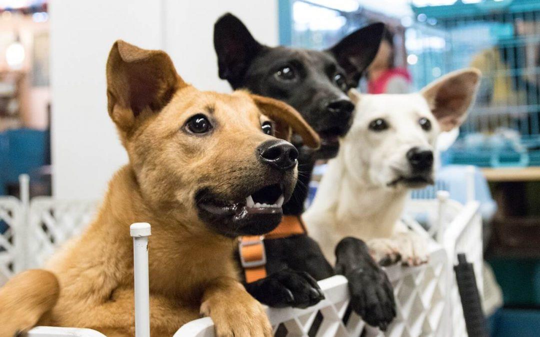 Les associations pour chiens à Caen