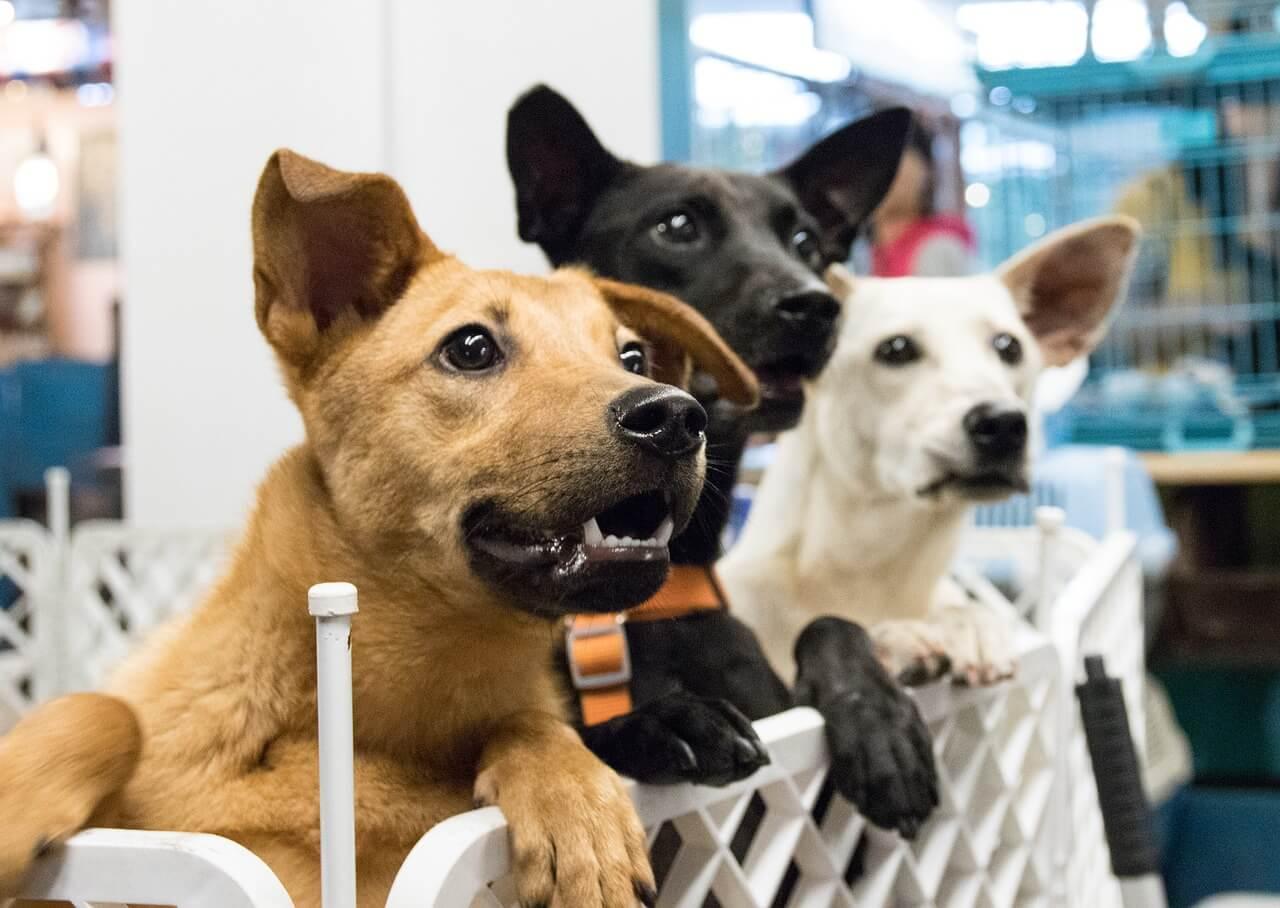 SPA Caen association chien