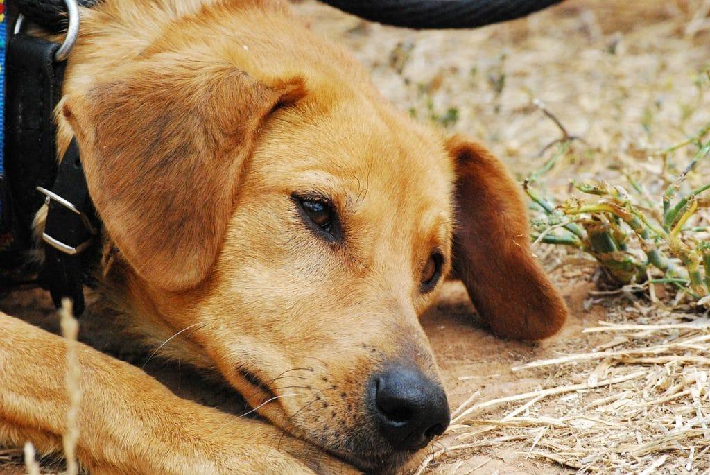 refuge pour chiens caen