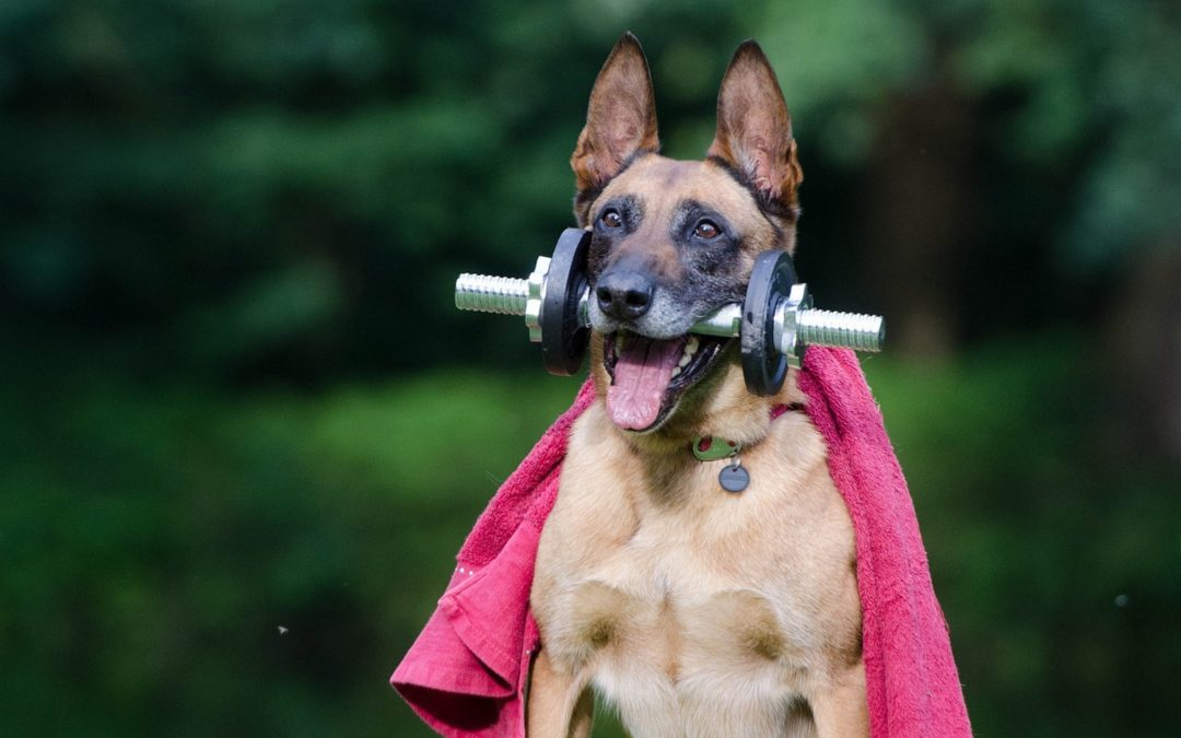 Chien hyperactif : comment calmer mon chien ?