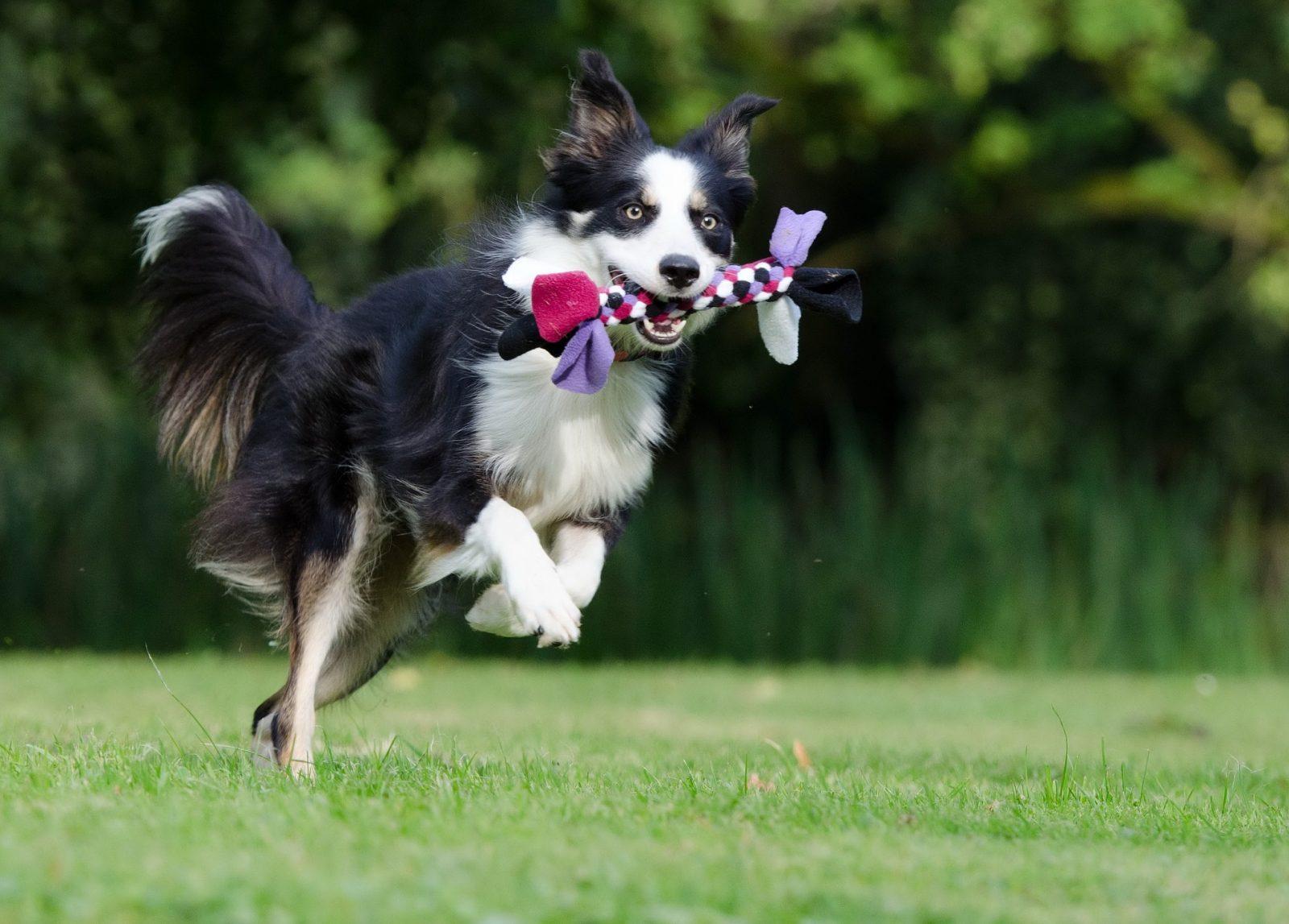 jouet pour chien hyperactif