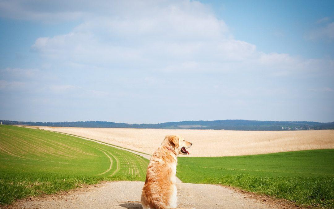 Apprendre le rappel à son chien : 6 étapes pour un rappel parfait.