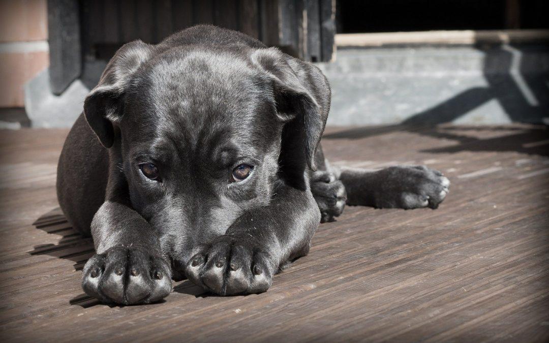 Mon chien a peur de tout : comment l'aider ?