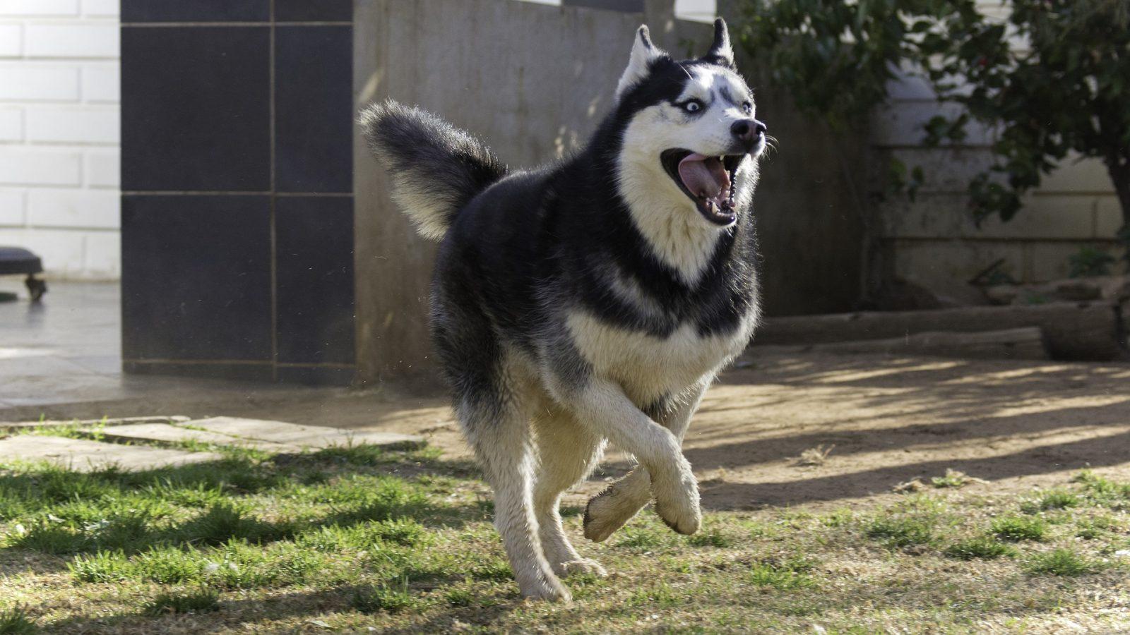 calmant pour chien hyperactif