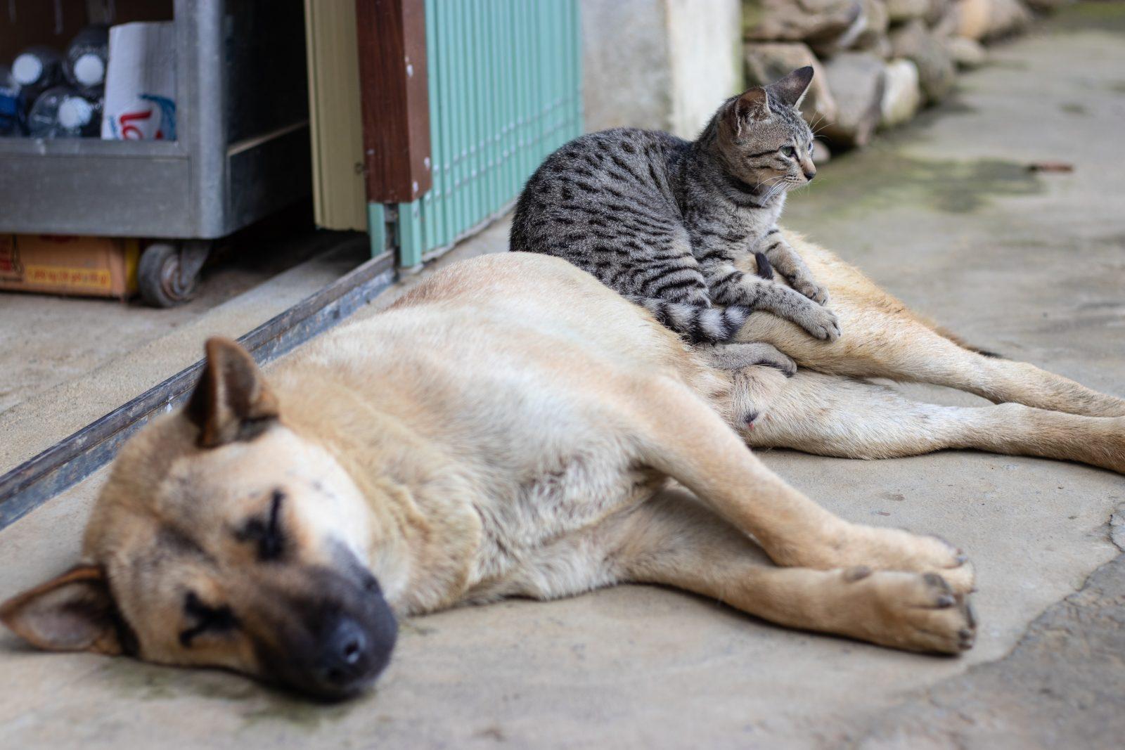 comment habituer un chat à un chien