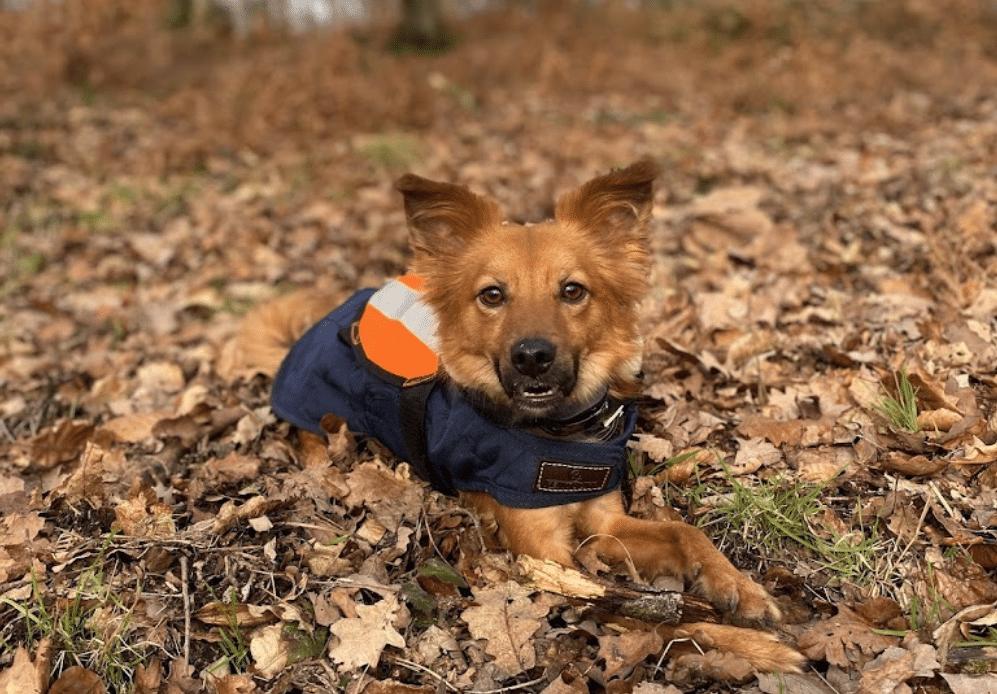 éducateur canin Ille-et-Vilaine