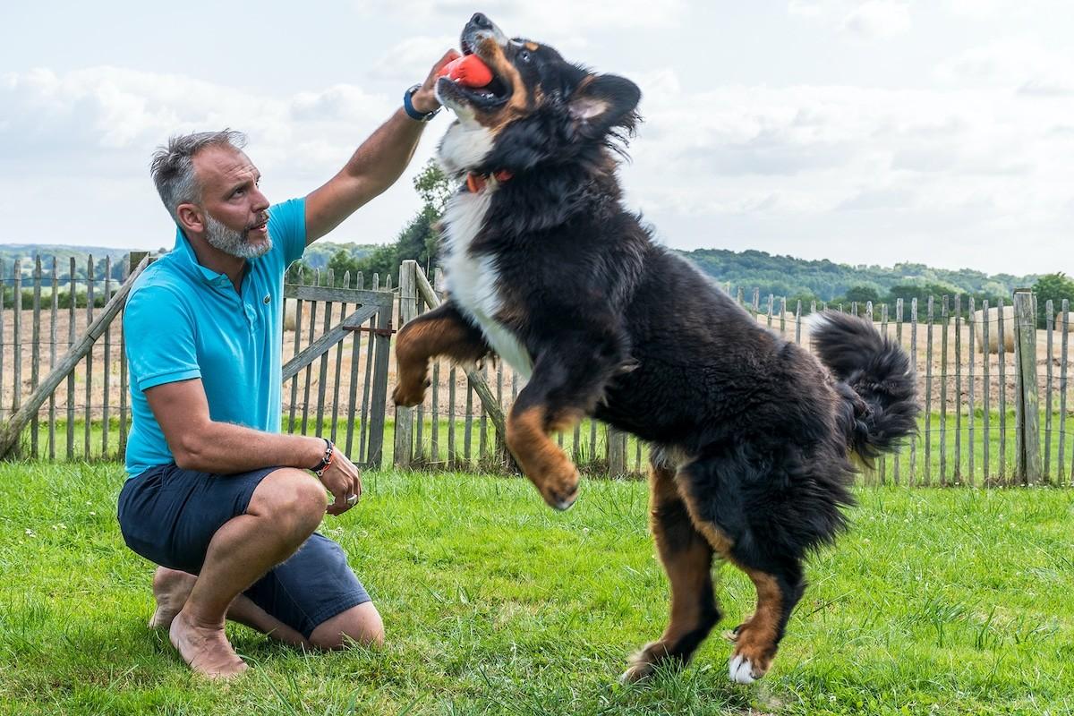 dressage chien Saint-Malo