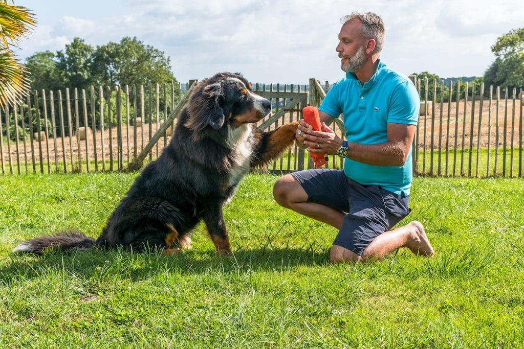 éducation canine Saint-malo