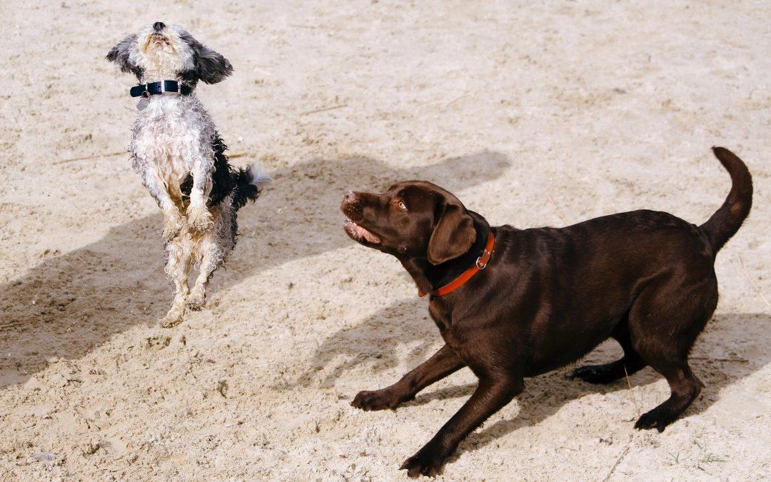 Mon chien saute : 3 étapes pour le stopper