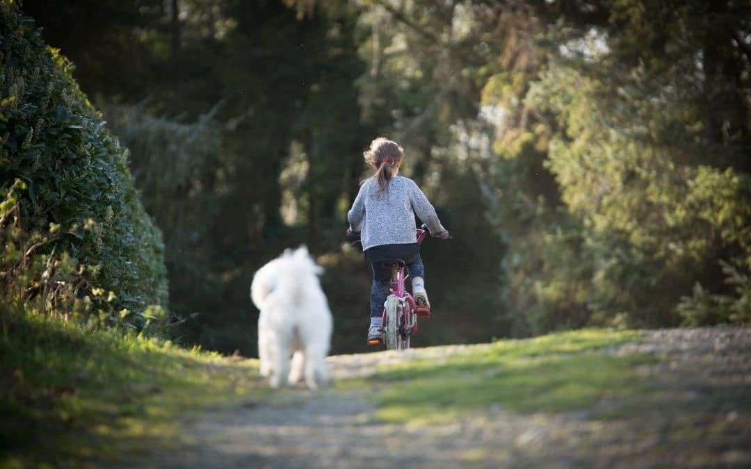 Mon chien court après les vélos : 5 étapes pour qu'il arrête