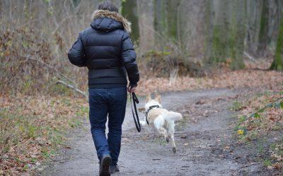 Mon chien court après les chats : 5 conseils pour stopper ce comportement