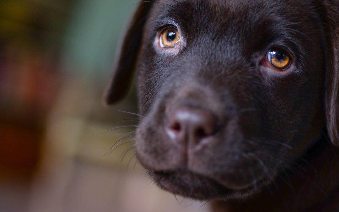 L'anxiété de séparation chez le chien : les conseils de votre éducateur canin